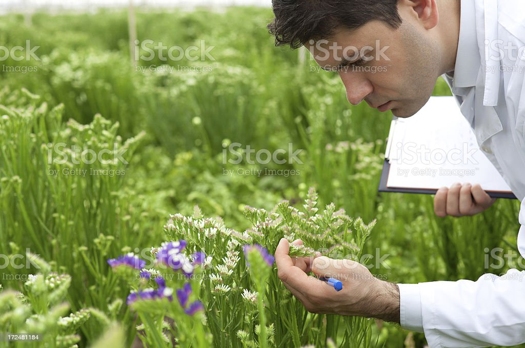 Scientist checking and recording flowers in greenhouse royalty-free stock photo