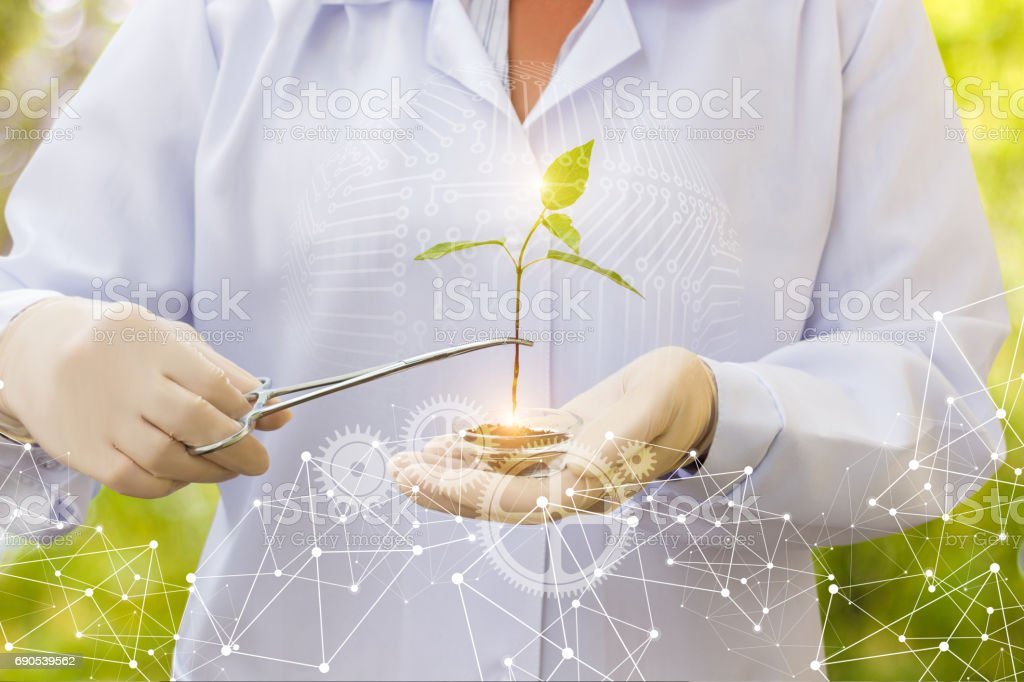 Scientist conducts tests of biotechnology . stock photo