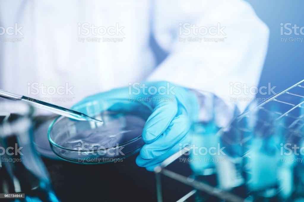 Wissenschaftler fallen zu Petrischale chemische Flüssigkeit in Glas Labor chemische Labortest Labor Forschungskonzept – Foto