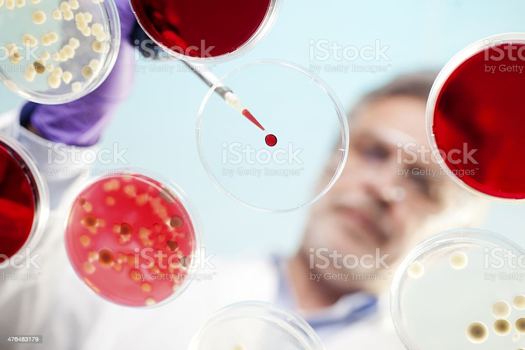 scientist examining cultures in petri dishes royalty-free stock photo