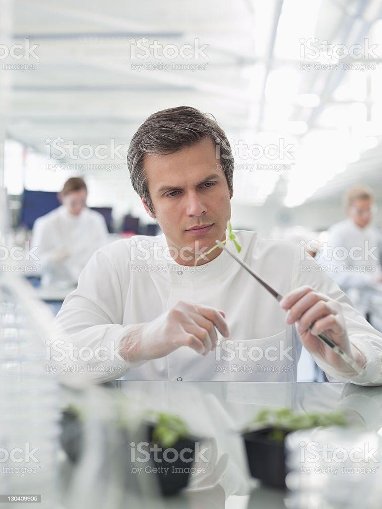 Scientist examining plant in lab royalty-free stock photo