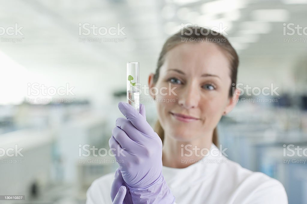 Scientist examining plant in test tube in lab royalty-free stock photo