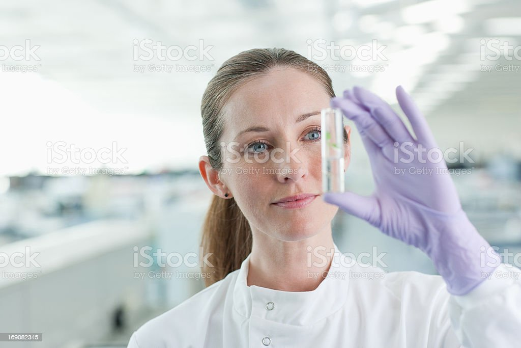 Scientist examining plant in test tube in lab stock photo