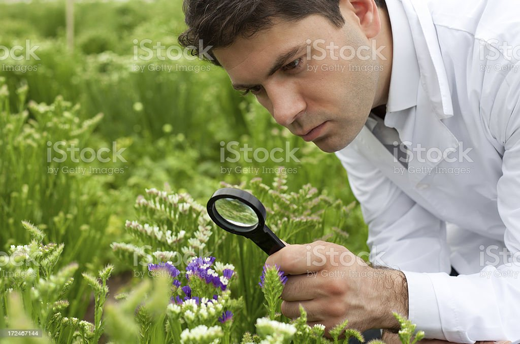 Scientist examining plant with magnifying glass royalty-free stock photo