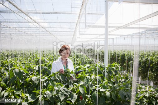istock Scientist examining plants in greenhouse 169030816
