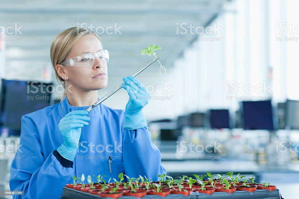 Scienziato esaminando le piante in laboratorio - Foto stock royalty-free di 25-29 anni