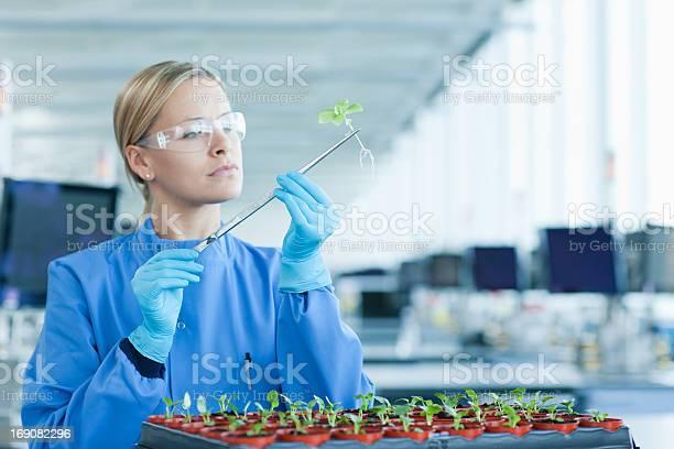 Scienziato Esaminando Le Piante In Laboratorio - Fotografie stock e altre immagini di 25-29 anni
