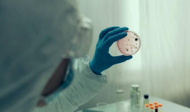 scientist examining virus in petri dish in a laboratory - mikrobiologia zdjęcia i obrazy z banku zdjęć