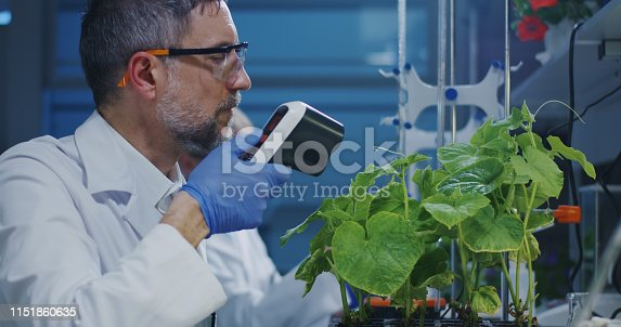 istock Scientist experimenting with a green plant 1151860635