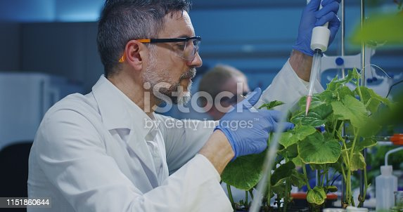 istock Scientist experimenting with a green plant 1151860644