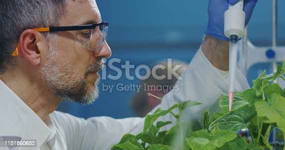 istock Scientist experimenting with a green plant 1151860652