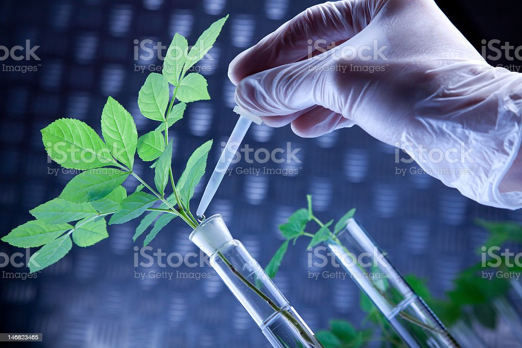 Scientist holding pipette over seedling royalty-free stock photo