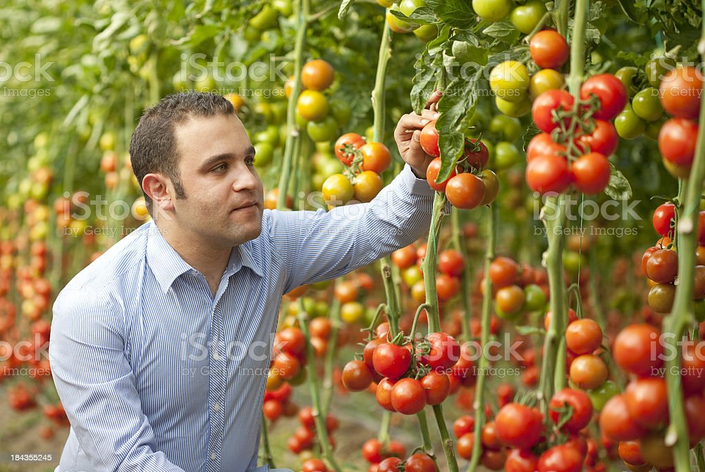 Scientist in greenhouse royalty-free stock photo