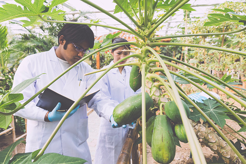 Scientist In Greenhouse Stock Photo - Download Image Now