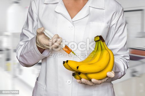 GMO experiment: Scientist injecting liquid from syringe into yellow bananas in agricultural research laboratory