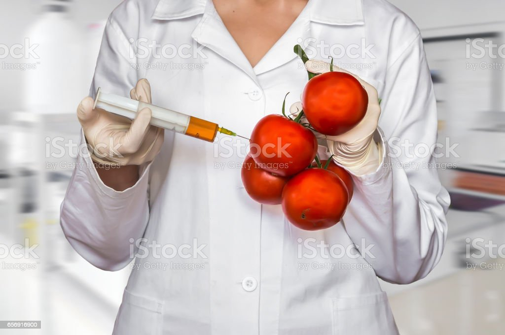 Scientist injecting liquid from syringe into red tomatoes stock photo