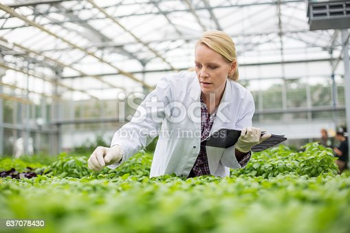 istock Scientist inspecting plants 637078430