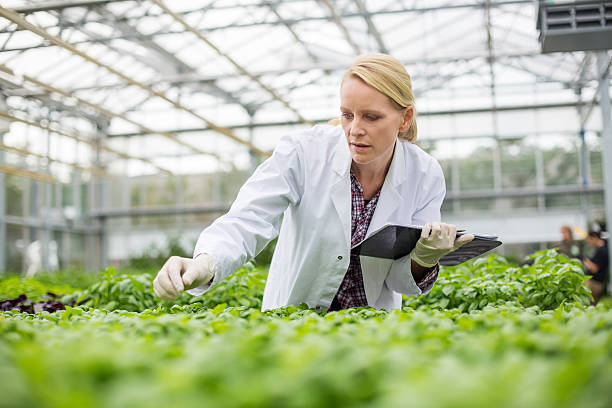 Scientist inspecting plants Female scientist inspecting plants growing in greenhouse crop plant stock pictures, royalty-free photos & images