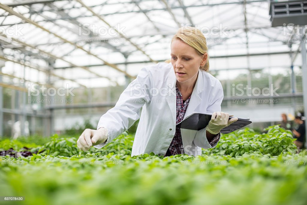 Scientist inspecting plants stock photo