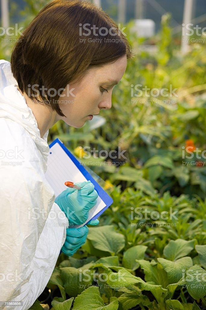 Scientist inspecting plants royalty-free stock photo