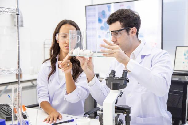 Wissenschaftler auf der Suche, Ratte und miteinander reden. Wissenschaftler forschen im Labor. – Foto