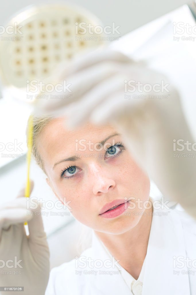 Scientist observing petri dish. stock photo
