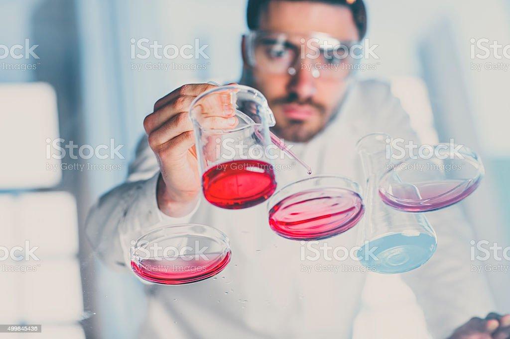 Scientist pipetting sample into a petri dish in a laboratory stock photo