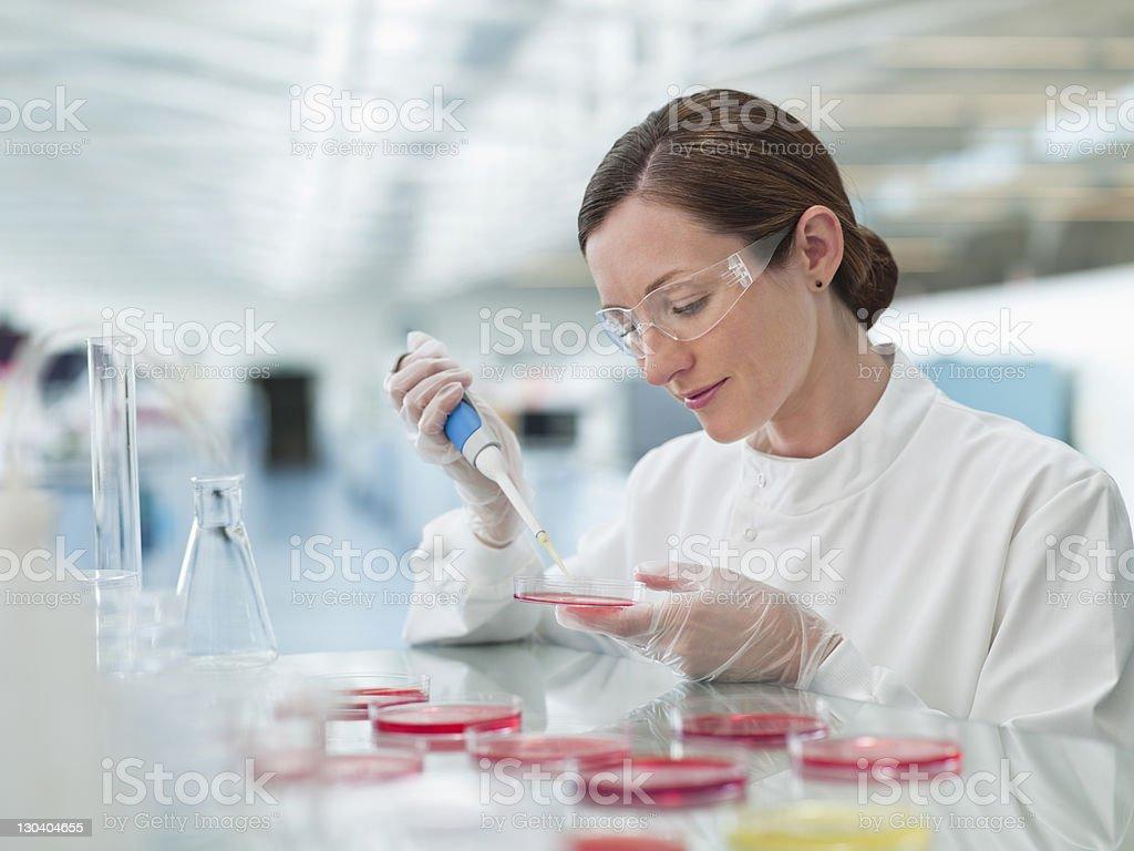 Scientist putting liquid in petri dishes in lab stock photo