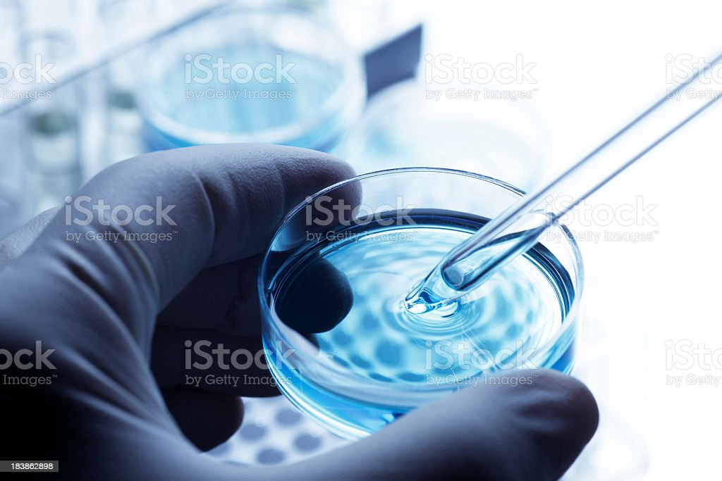 Scientist removing a sample out of a petri dish using a pipette stock photo