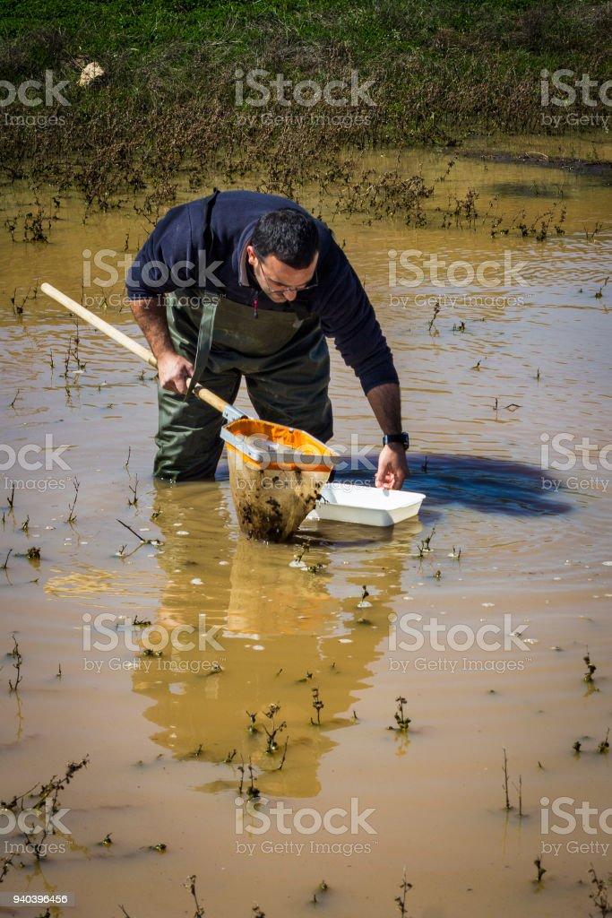 Scientifique d'échantillonnage pour les organismes vivants dans un milieu humide - Photo