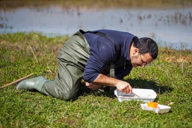 vetenskapsman sortering biologiska netto prover på en våtmark - akvatisk organism bildbanksfoton och bilder