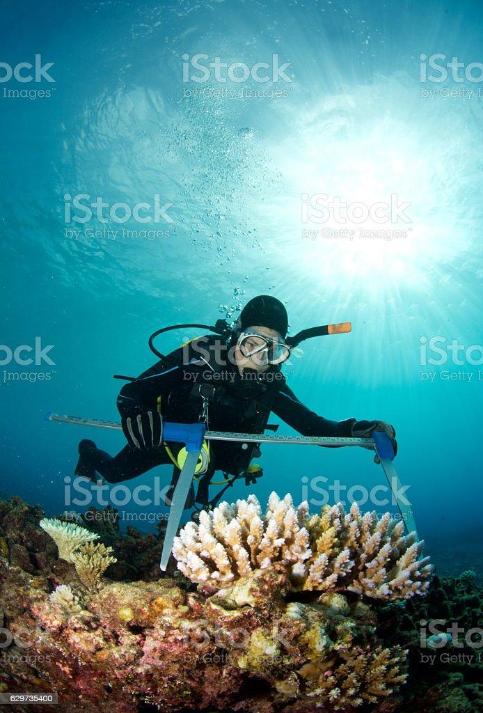 scientist studies coral bleaching stock photo