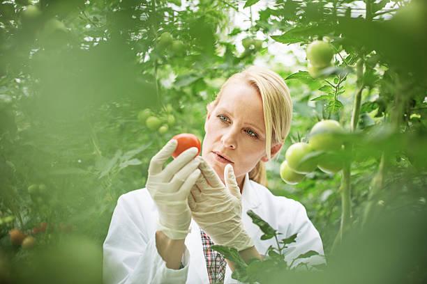 scientist studying plant life - bio lebensmittel stock-fotos und bilder