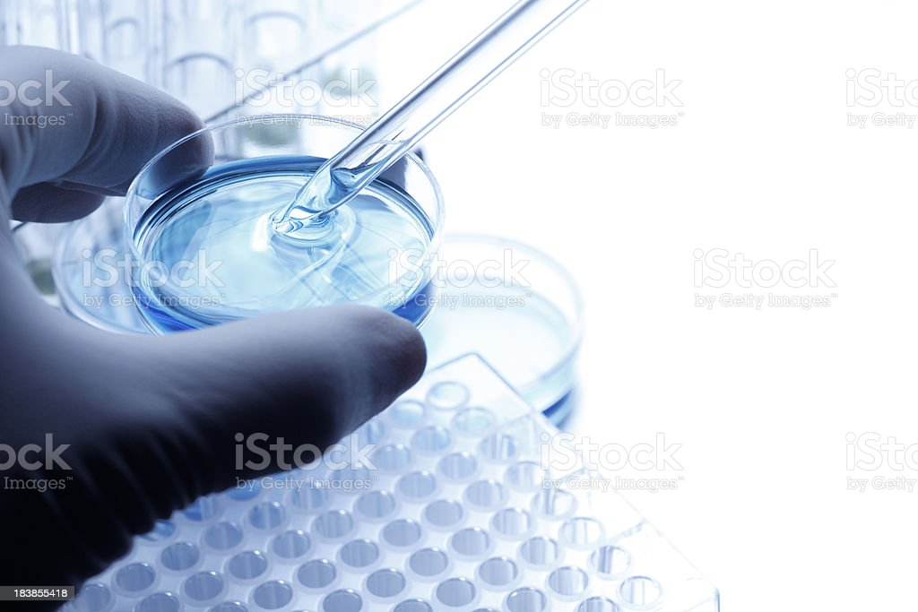 Scientist taking a sample out of a petri dish using a pipette royalty-free stock photo