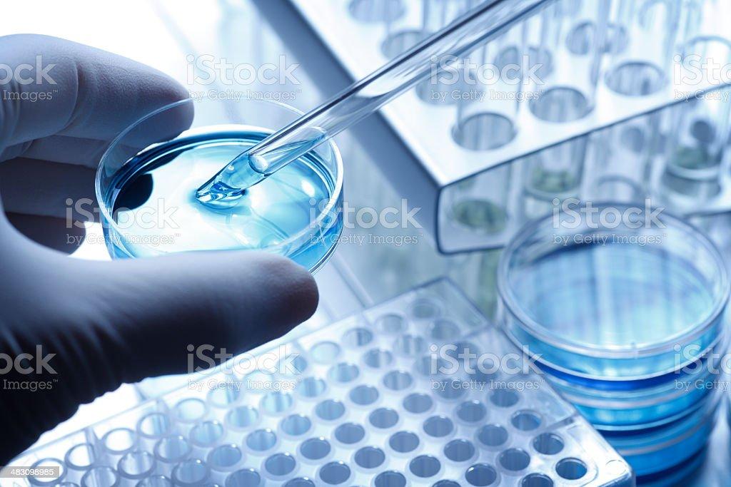 Científico de tomar una muestra de una placa de petri con una pipeta - foto de stock