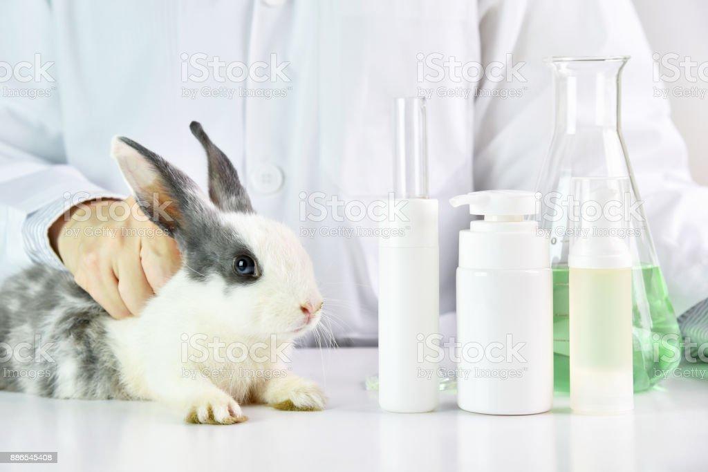 Wissenschaftler testen auf Kaninchen Tier im chemischen Labor, Grausamkeit kostenlose Kosmetik-Schönheit-Produkt-Konzept. – Foto