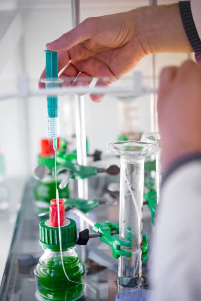 forskare med en spruta för att lägga näring element till blågröna alger under ett vetenskapligt experiment - laboratory add flask bildbanksfoton och bilder