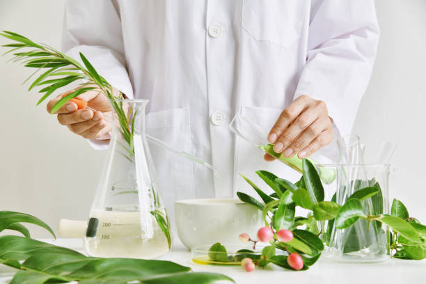 Scientist with natural drug research, Natural organic botany and scientific glassware, Alternative green herb medicine, Natural skin care beauty products, Research and development concept. stock photo