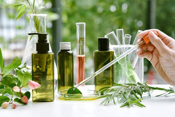 Scientist with natural drug research, Natural organic botany and scientific glassware, Alternative green herb medicine, Natural skin care beauty products, Research and development concept. Scientist with natural drug research, Natural organic botany and scientific glassware, Alternative green herb medicine, Natural skin care beauty products, Research and development concept. natural condition stock pictures, royalty-free photos & images