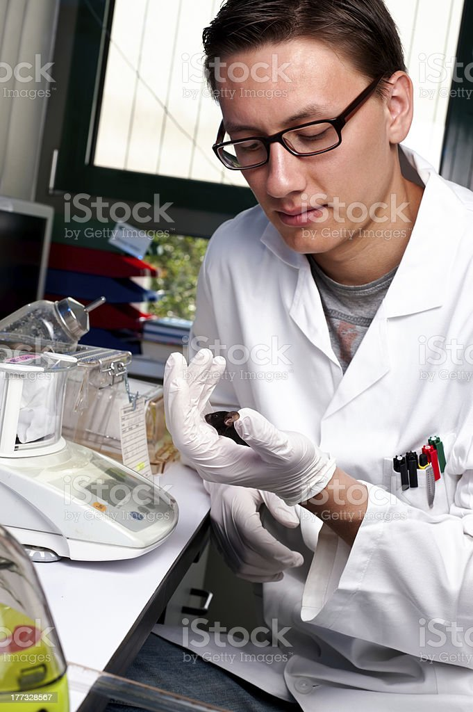 Scientist with the mouse stock photo