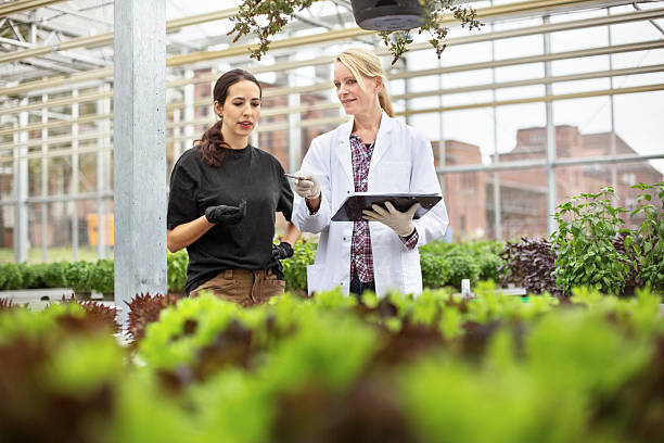 Scientist with worker examining plants in greenhouse Female farm worker discussing with scientist in greenhouse while examining plants crop plant stock pictures, royalty-free photos & images
