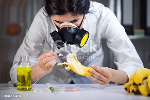 Scientist working on GMO bananas in lab