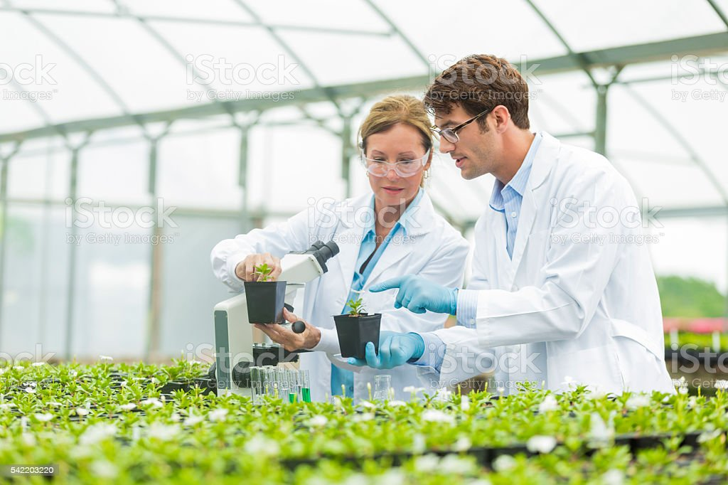 Scientists discussing botany stock photo
