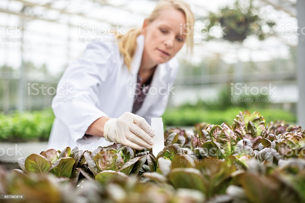 Scientists doing research in greenhouse farm stock photo