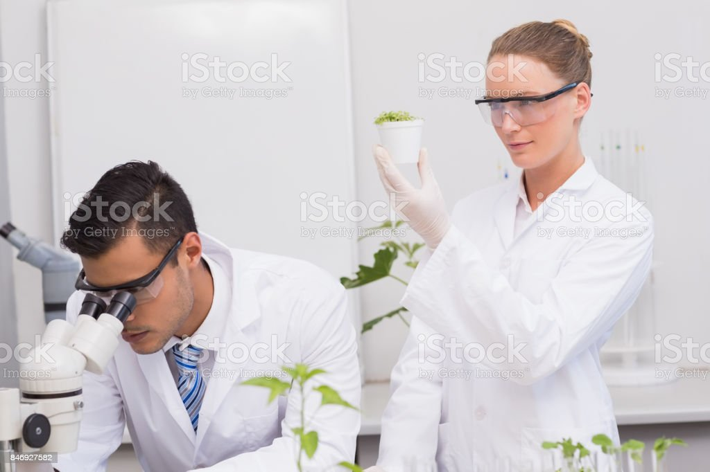 Scientists examining plants stock photo