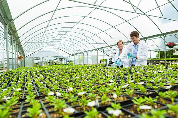 scientists greenhouse laboratory - теплица стоковые фото и изображения