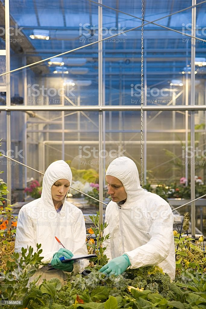 Scientists inspecting plants royalty-free stock photo