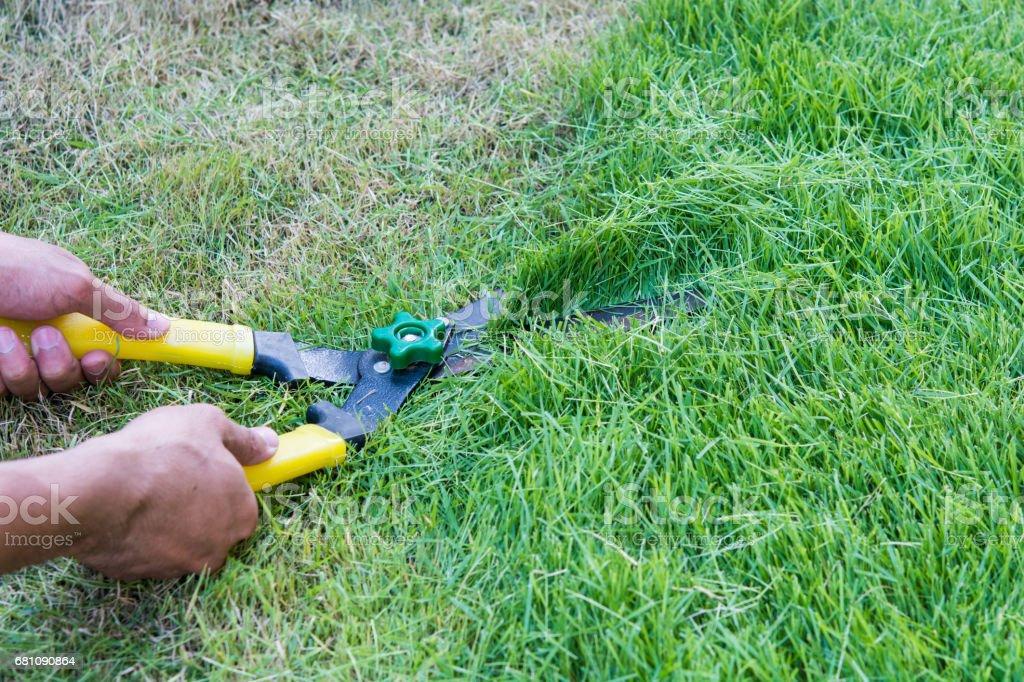 Scissors cut grass put royalty-free stock photo