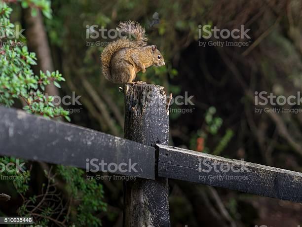 Photo of Sciurus on a Tree