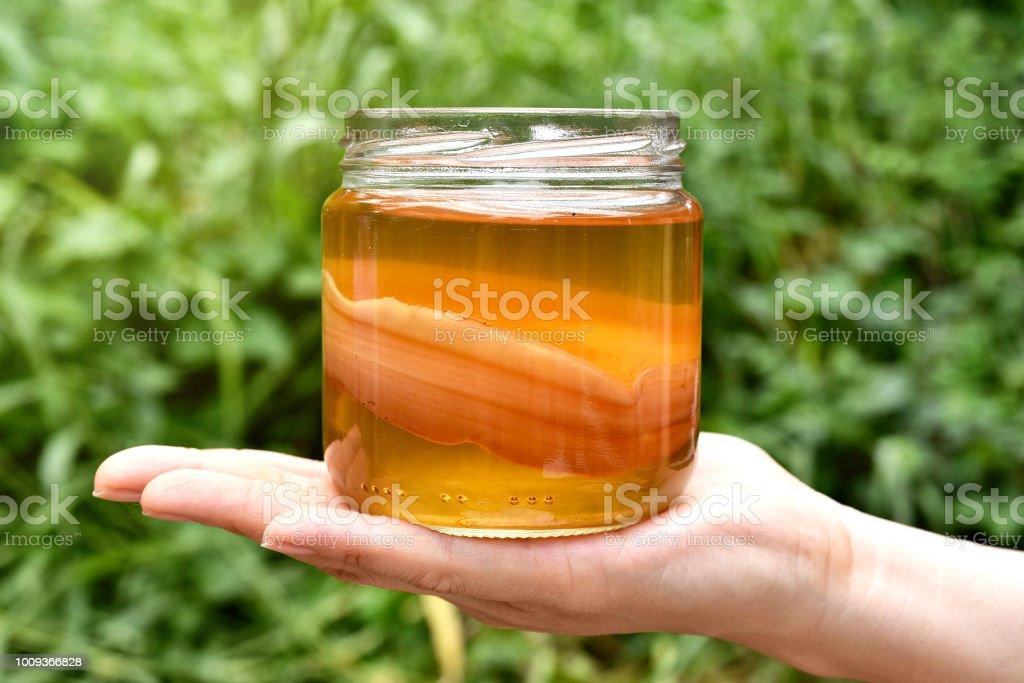 Scoby, Hand hält Tee Pilz mit Kombucha-Tee, gesund fermentierte Lebensmittel, probiotische Ernährung trinken für gute Balance Verdauungssystem. – Foto